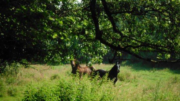 Petits conseils pansage cheval