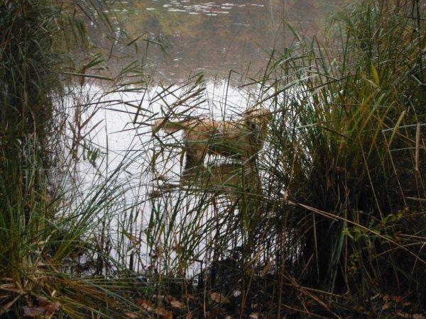Couleurs d'automne et étangs...