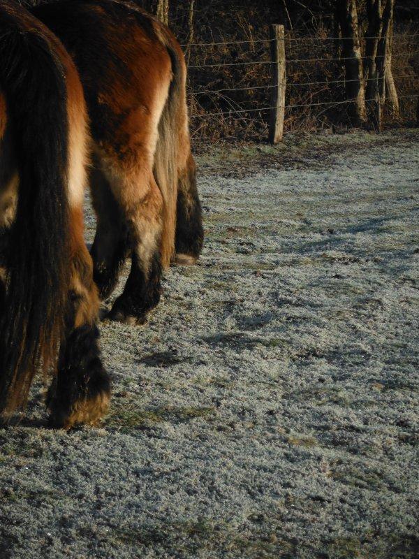 Tofs de campagne et chevaux...
