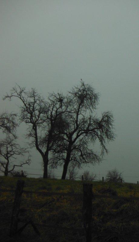 Argonne dans la brume...
