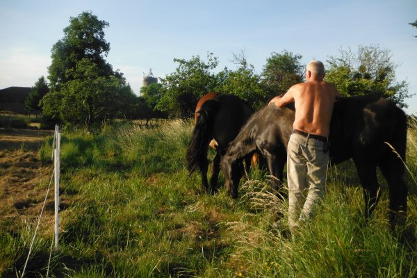 Partage chevaux en pâture.