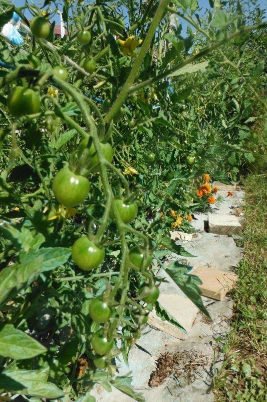 Tour côté jardin...;)