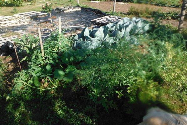 Côté jardin, suite...