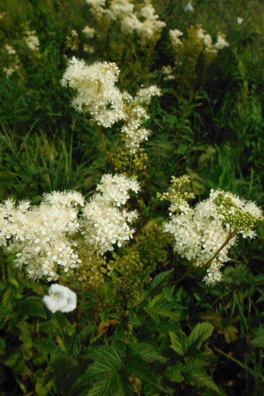 Belval en Argonne, découverte des plantes, suite.