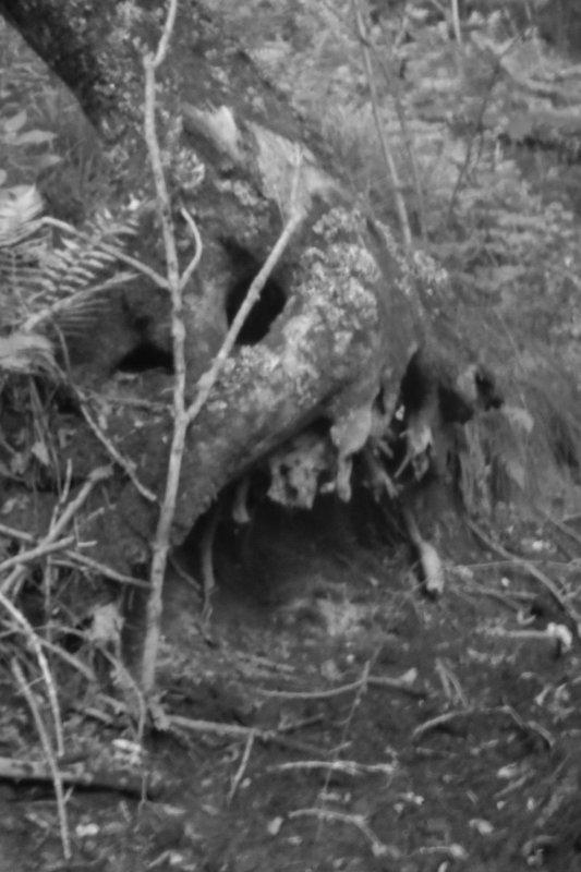 phallus impudique et flâneries forestières...;)