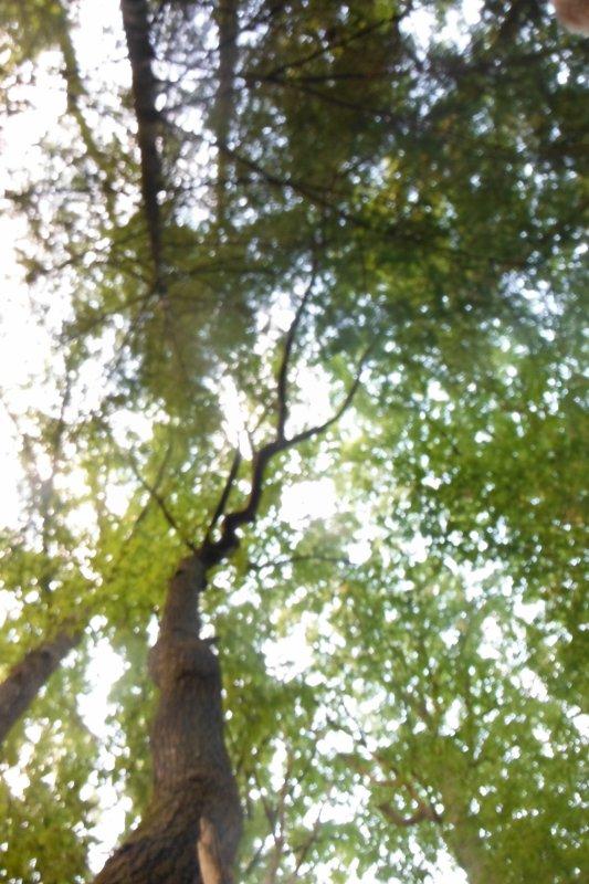 flâneries forestières suite...