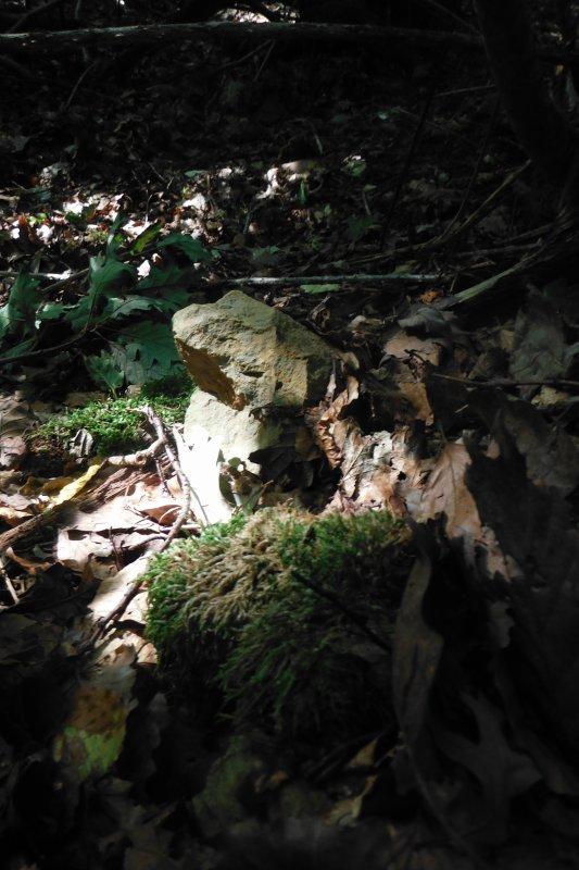 En forêt et autre.