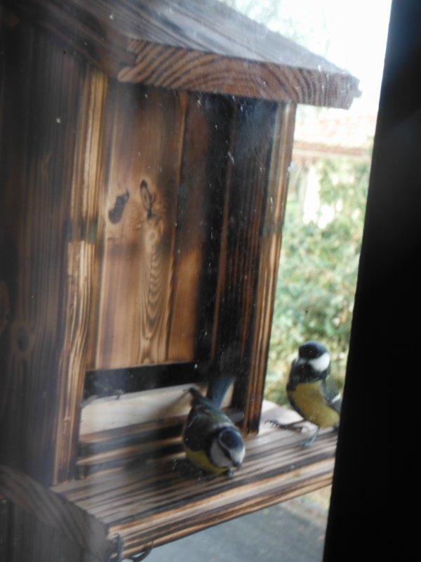 mangeoire à oiseaux...