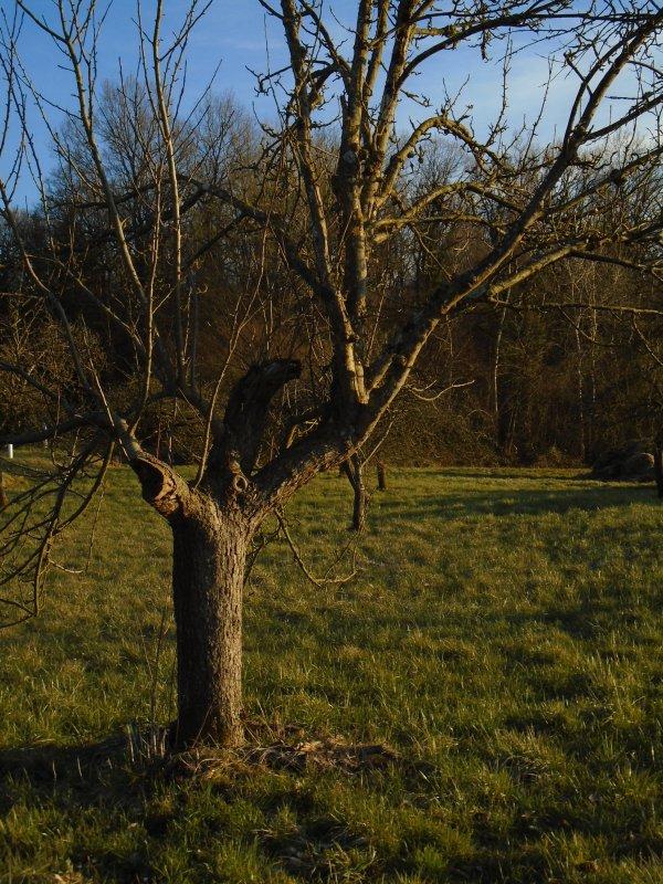 Pour un arbre...