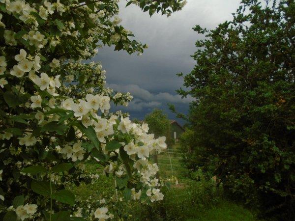 ciel d'orage et plantes.