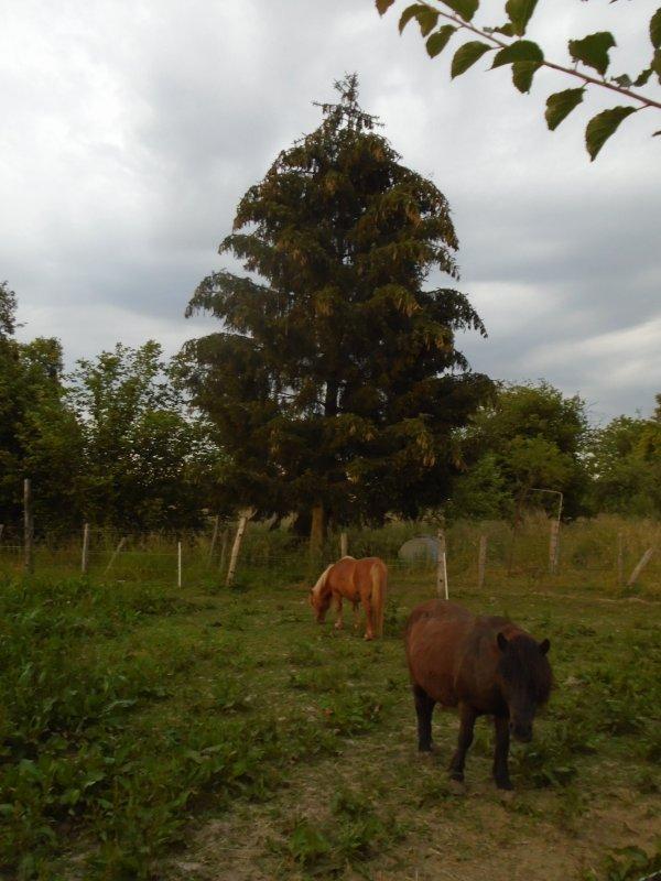 Partages liens permaculture et autres