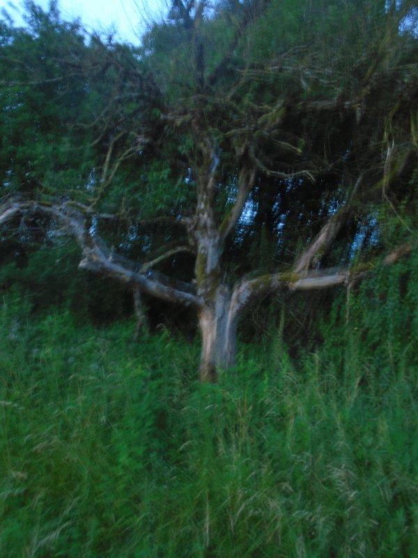 Promenade et autre en Argonne