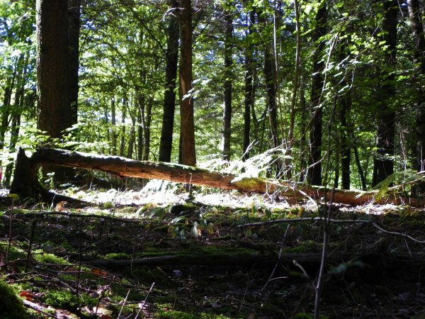 En forêt...