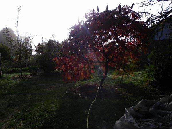 Matinée d'automne.