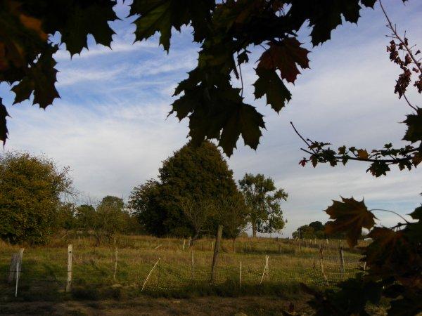 Fraîches matinées d'automne...