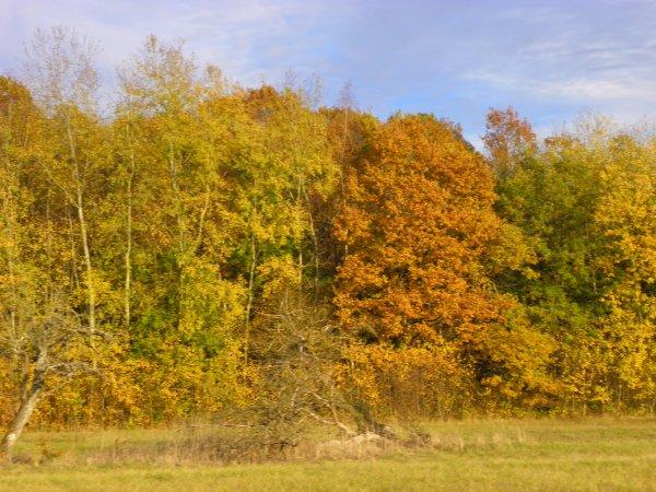 Tofs d'automne...