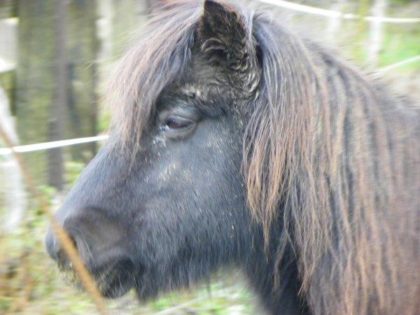 Les images insoutenables d'un abattoir de chevaux dans le Jura