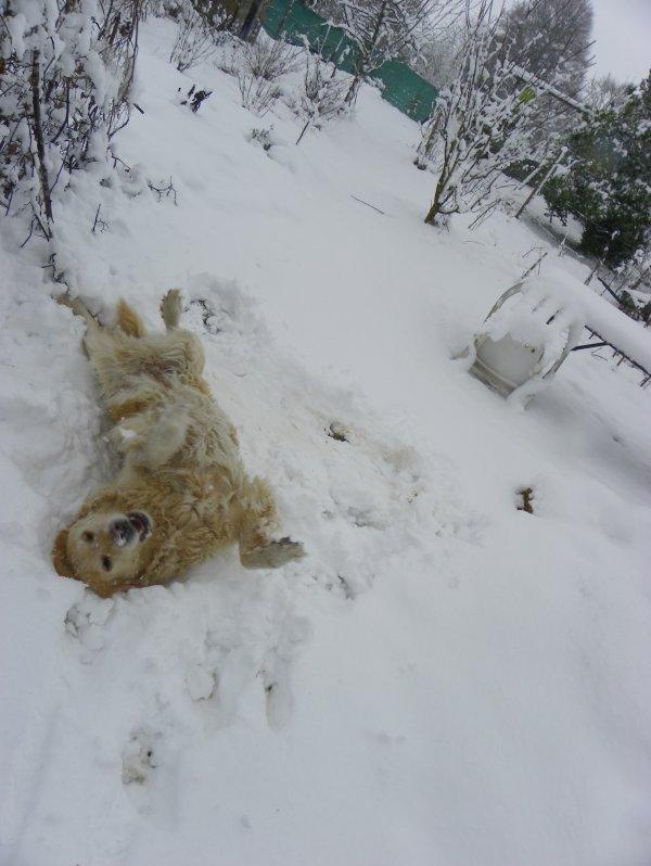 La neige de retour en Argonne...
