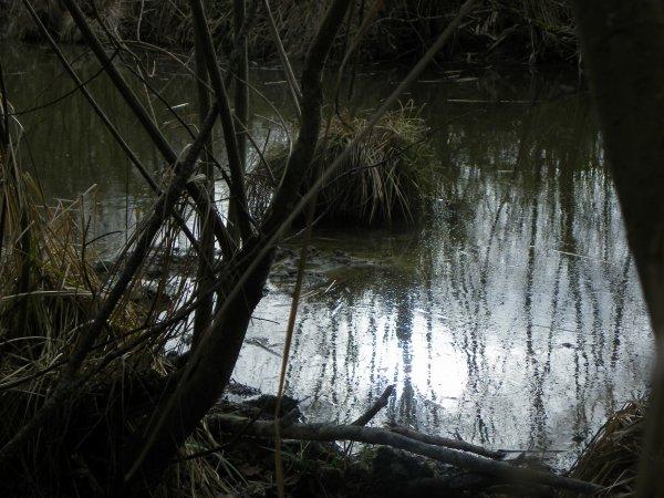 Promenade au bord de l'eau...