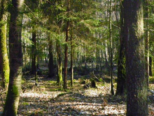 Les arbres ont une vie secrète que nous n'imaginons pas