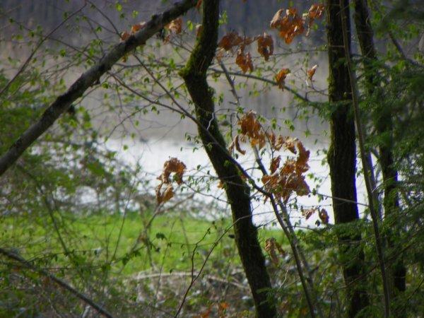 Adieu feuilles mortes.