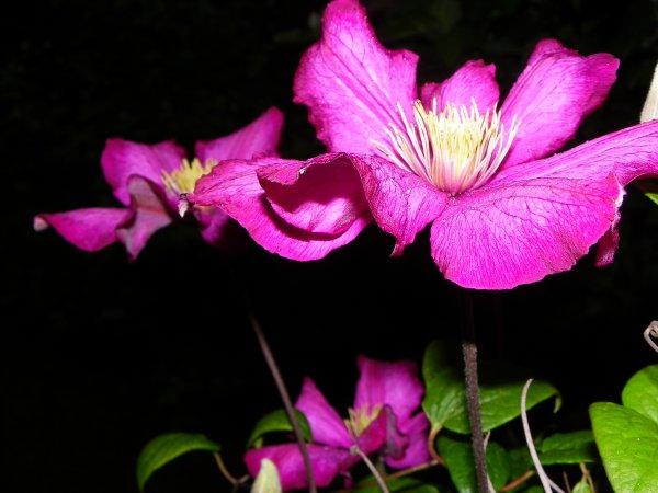La vie secrète des plantes - Se reproduire | ARTE