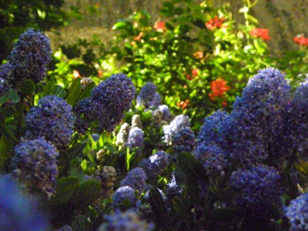 Fleurs et autres