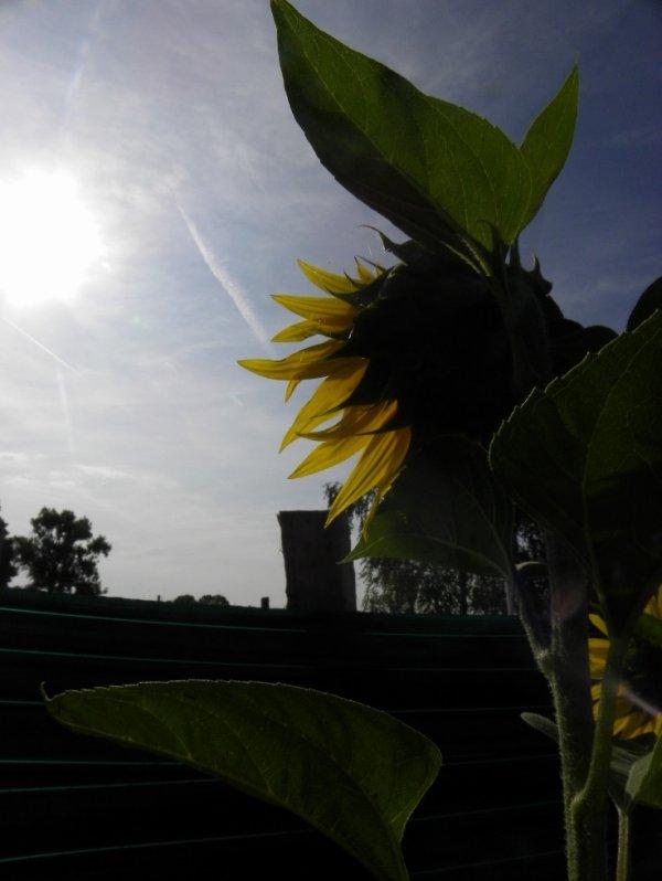 De soleil et de nature