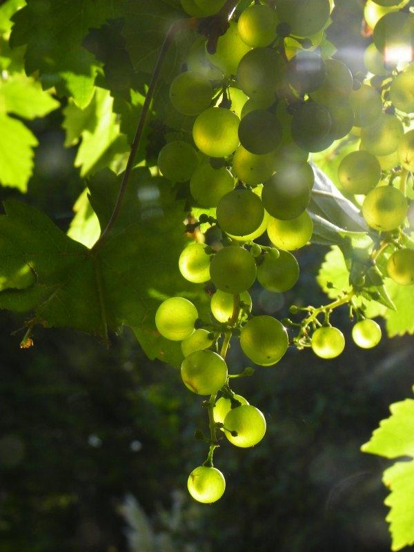soleil après les pluies.