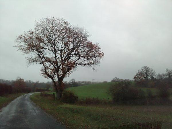 Pluies et brumes dans les vignes et autres.