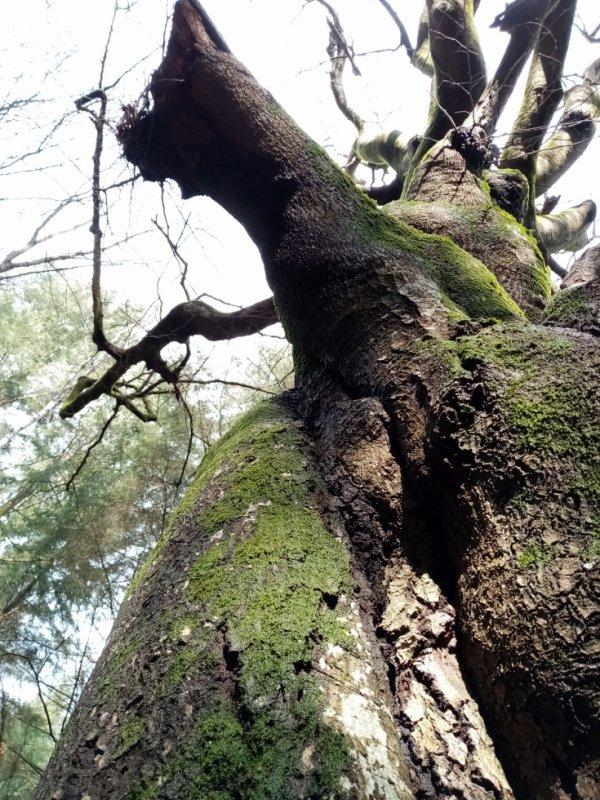 D'arbre et d'autre.