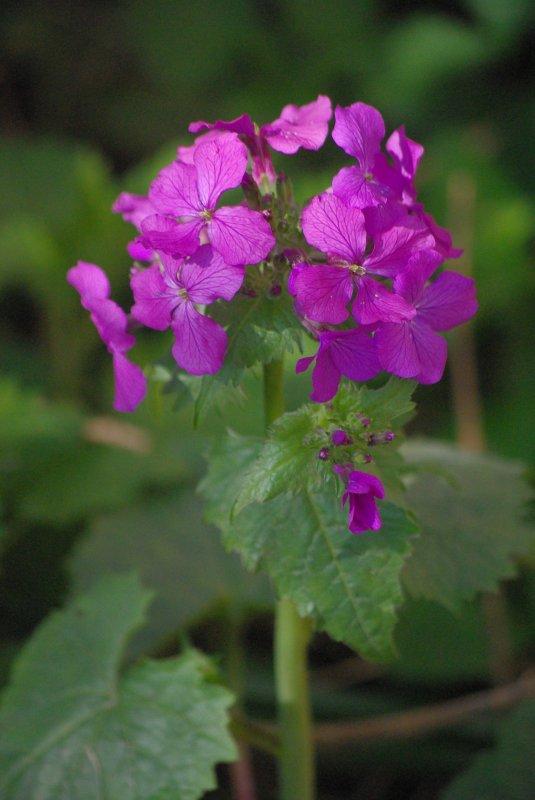 En fleur ;) !