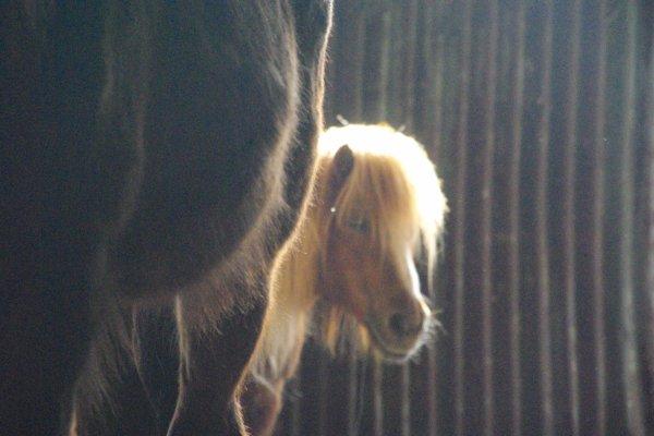 chevaux au parc et autre