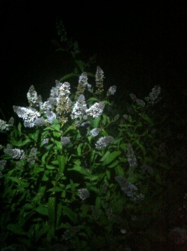 De fleurs...