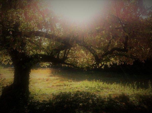 Film d'archives 14-18 / Nos dragons en Lorraine