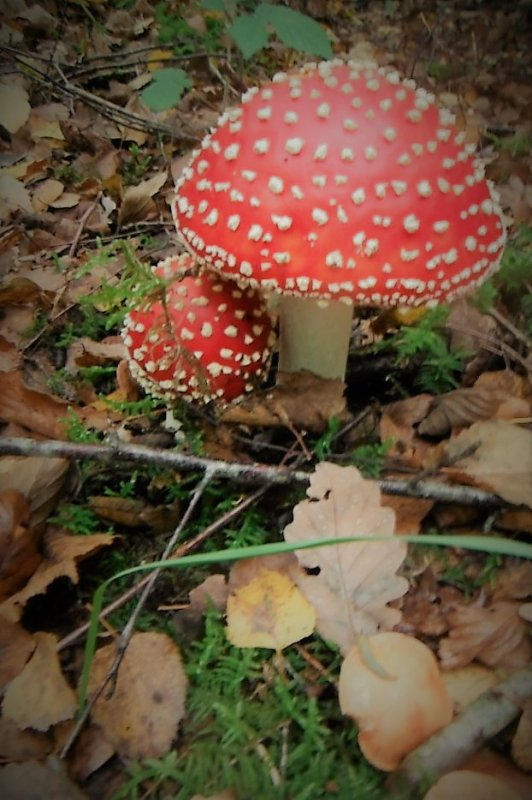 Pluie et champignons, nature itou.