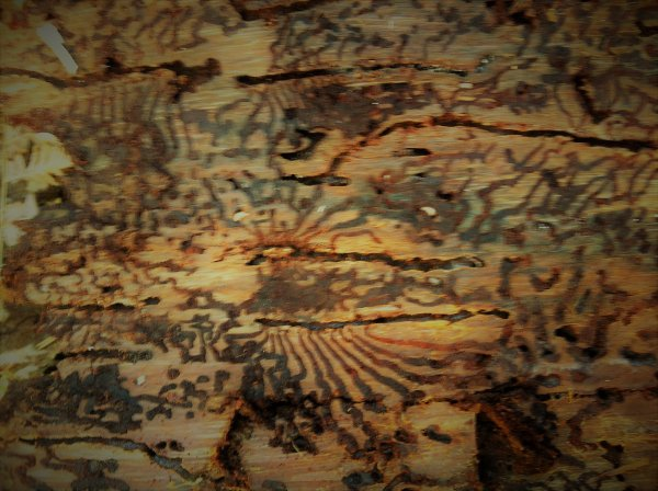 Le passé des Hommes   Homo sapiens, les nouvelles origines - ARTE