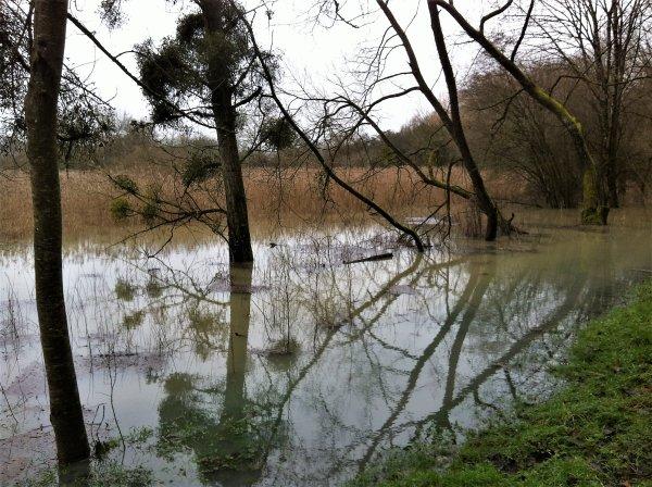 Argonne sous les pluies