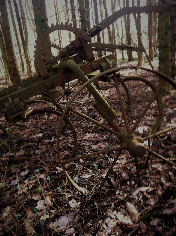 #199 Les plantes sauvages à la sortie de l'hiver