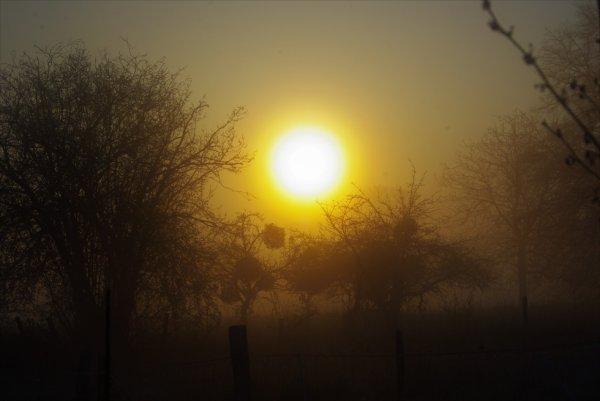 Soleil sur verger et autre
