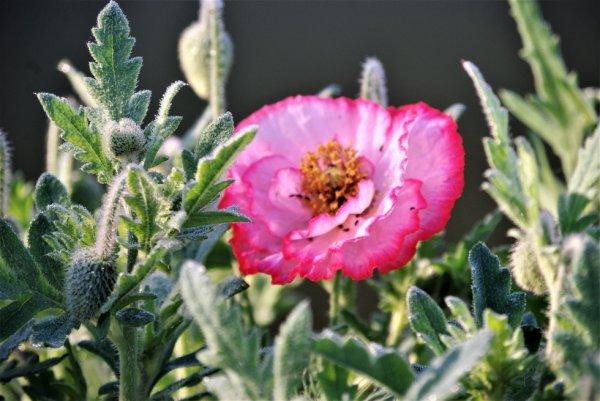 La fleur du jour...