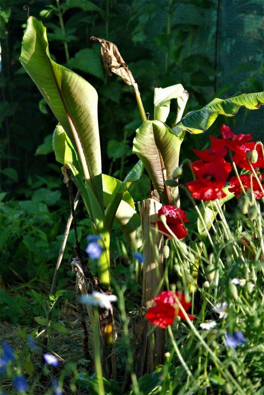 nature et jardin