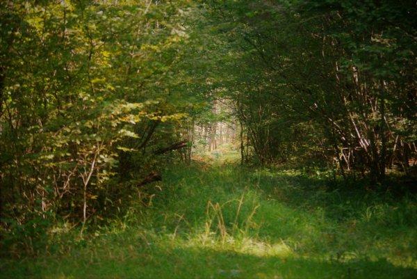 Forêts et autres.