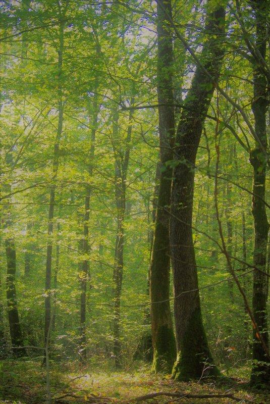 forêt du jour suite