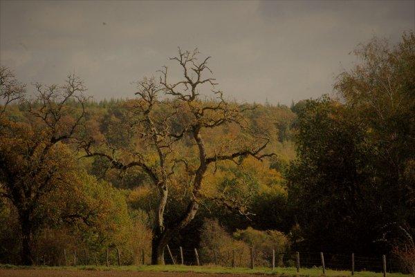 Couleurs d'automne en Argonne.