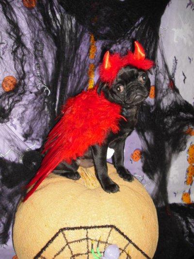 merci sylvie pour ces magnifiques photo pour halloween de ma mya et luna elle sont supers heureuse merci