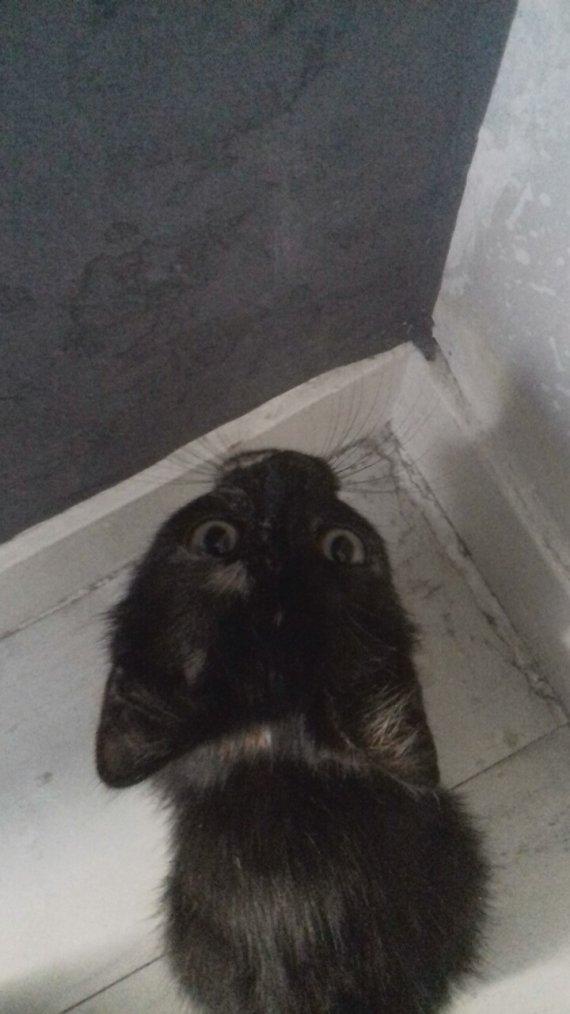 J'ai (encore) trouvé un chat...