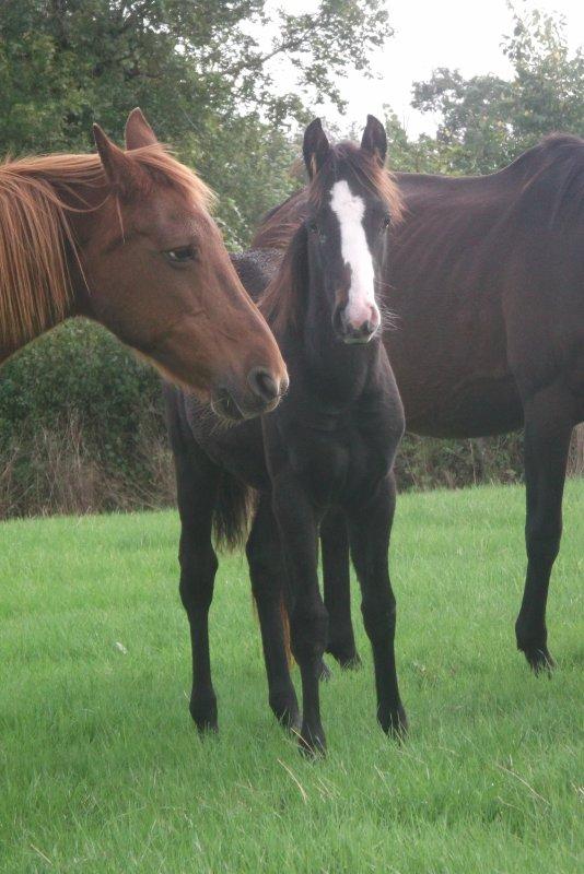 octobre 2012 :Campbelle d'Angounil et C'Kinder d'Angounil ont 5 mois