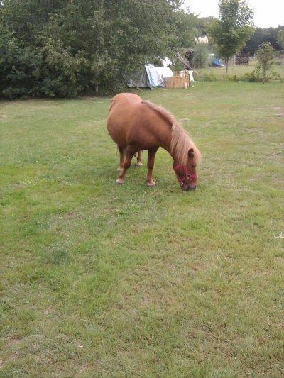 Un poney dans le jardin...