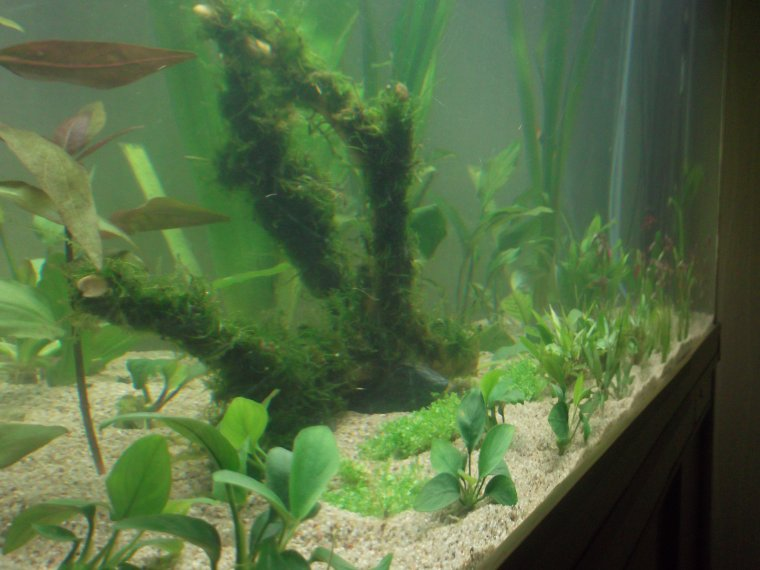 Mon aquarium 600l aujourd hui 100 passionner for Aquarium 600l